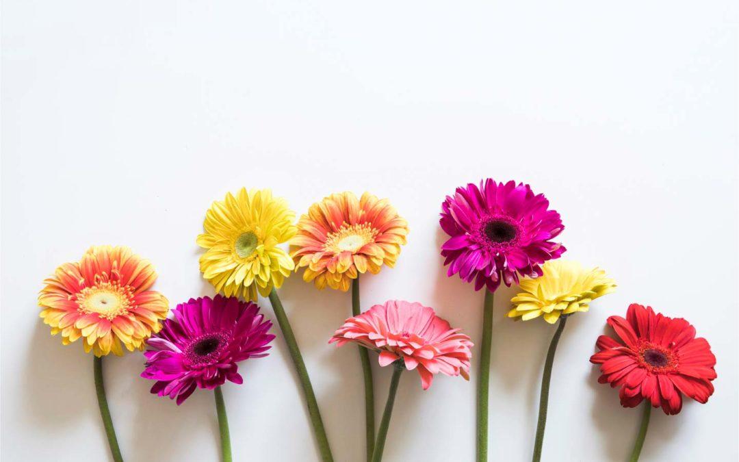 Fiori recisi: come mantenere a lungo regali e composizioni floreali