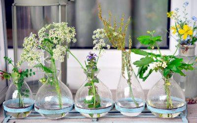 Giardinaggio fai da te, tutti i consigli per giardinieri inesperti