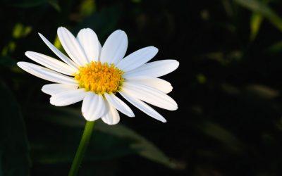 I 5 bouquet più belli da regalare a giugno