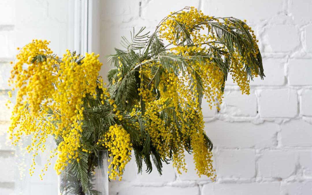 Per la festa della donna regala un bouquet e decoralo con le mimose!